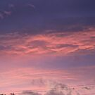 sunset in the pink by sharon wingard