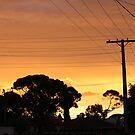 golden sunset by sharon wingard