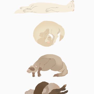 Chart of ferret sleep positions by Fauxbulous