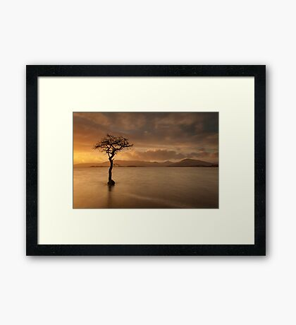 The Tree of Milarrochy Framed Print