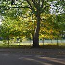 Sunny Park Tree by babibell