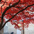 Red Tree by babibell