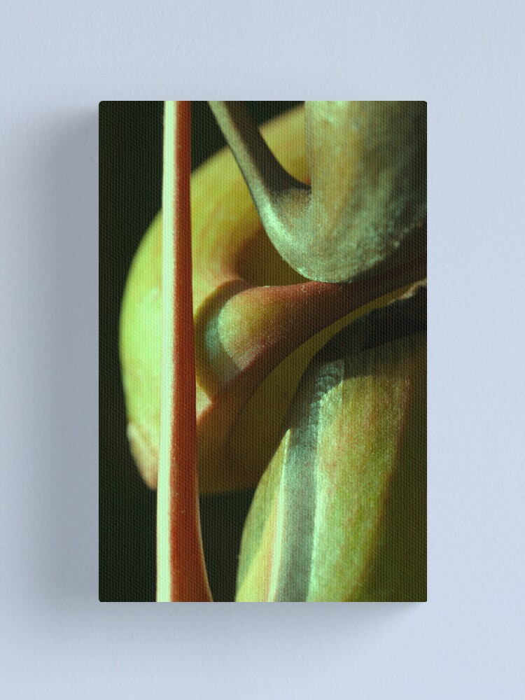 Alternate view of vegetal sensuality Canvas Print