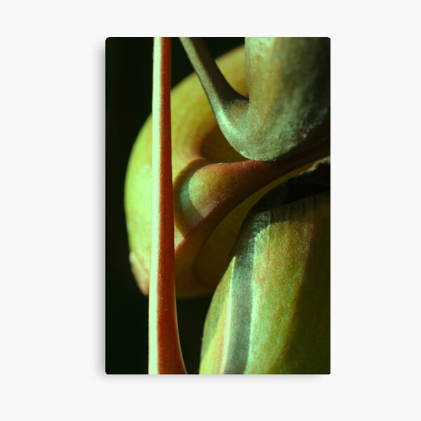 vegetal sensuality Canvas Print