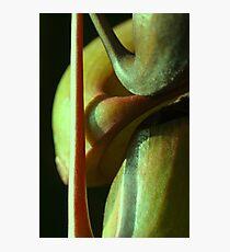 vegetal sensuality Photographic Print