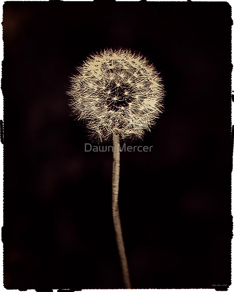 Dreamy Dandelion by MissDawnM