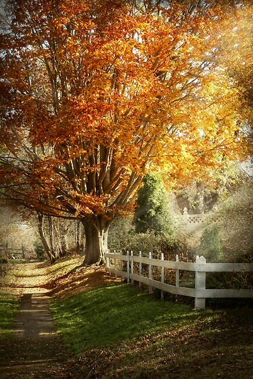 Autumn - Westfield, NJ - I love autumn by Michael Savad