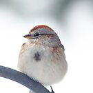 American Tree Sparrow ~ by Renee Blake