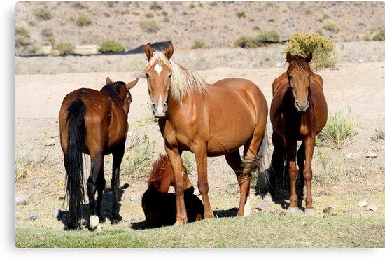 The Gangs All Here,Reno Nevada USA by Anthony & Nancy  Leake