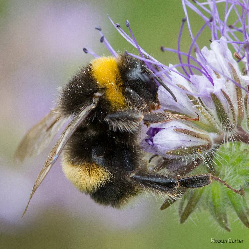 Bumbling Along by Robyn Carter
