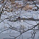 Mink Playing on Open Water by Scott Hendricks