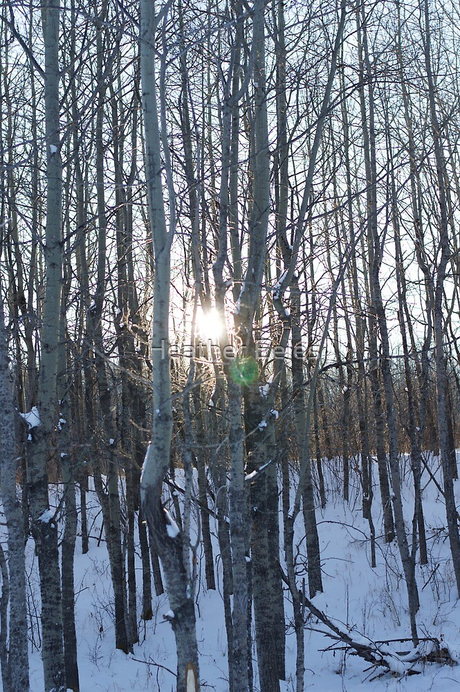 Sun in the Snow by Heather Eeles