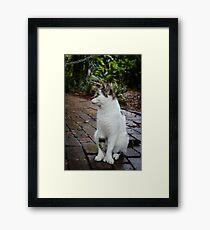 Hemingway Cat Framed Print