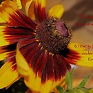 To Everything There Is A Season. . . by aprilann
