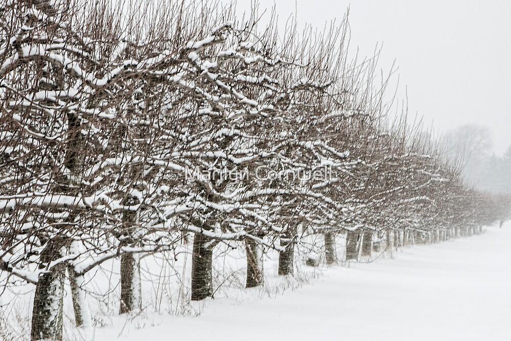 Snow Line by Marilyn Cornwell