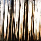 Forest against the light by jul-b