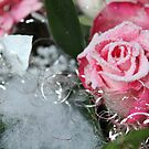 Rose Rimmed with Sugar by karina5