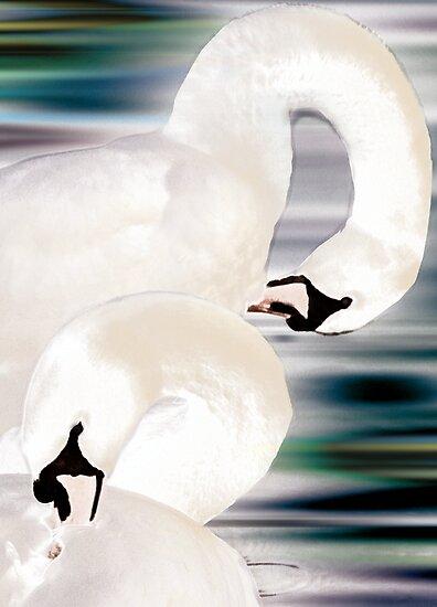 Swan Lake Hogganfield Loch Glasgow Scotland by simpsonvisuals