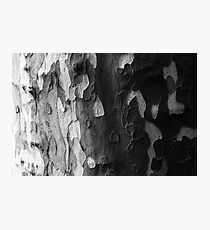 Black, White and Grey Photographic Print