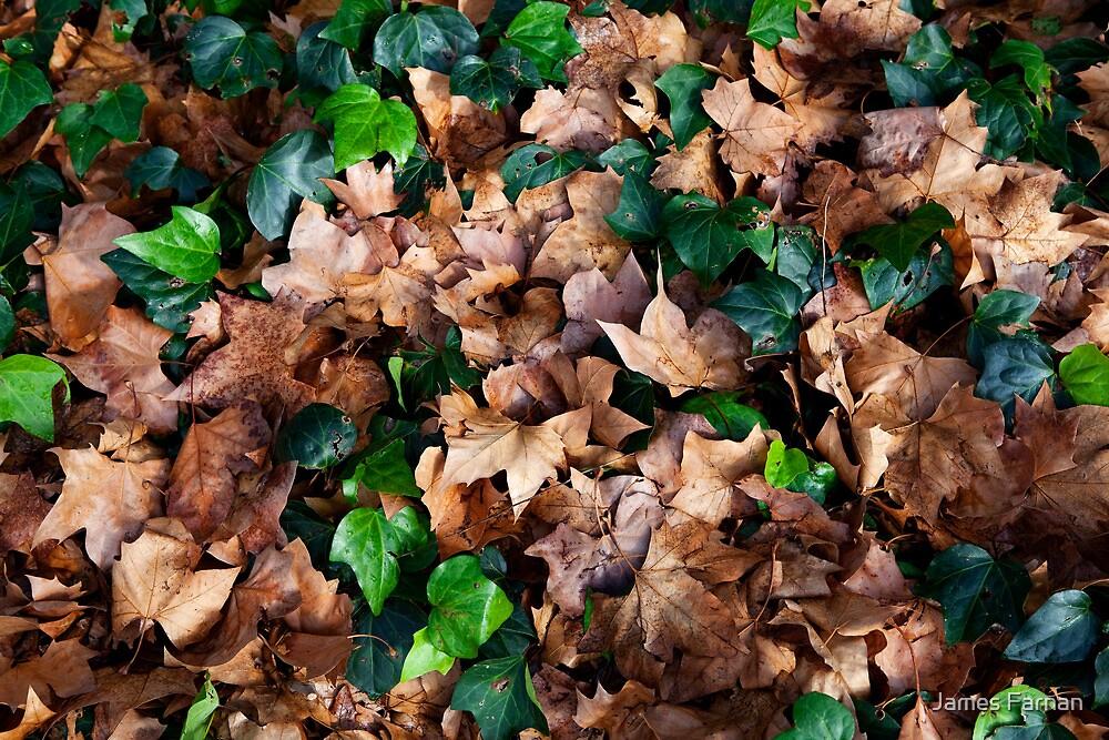 Leaves by James Farnan