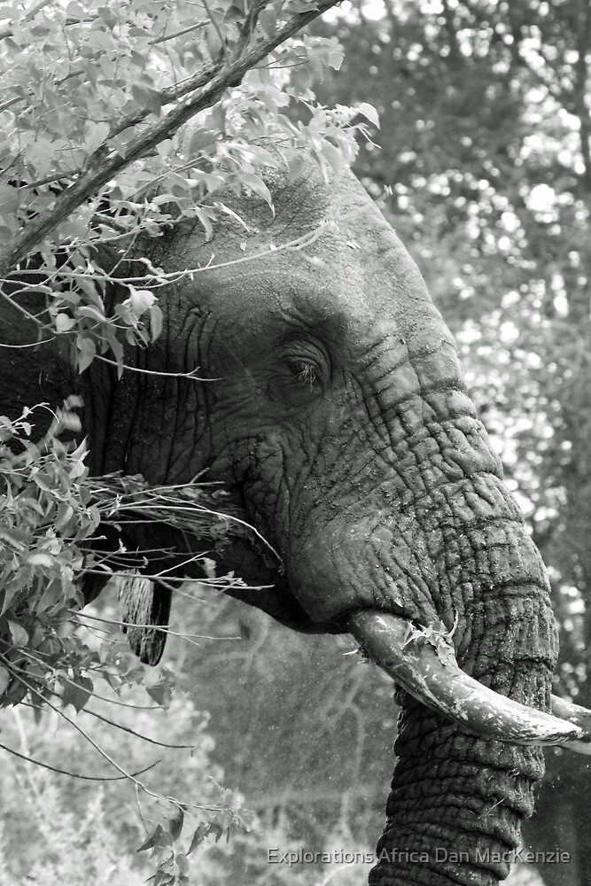 Hiding in the bushes by Explorations Africa Dan MacKenzie