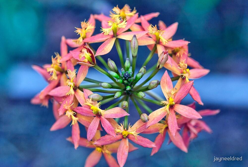 Floral Crown by jayneeldred