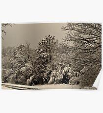 Southern Illinois Winter Scene 4_ Dec 2012 Poster