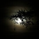Leaf Silhouette over the Moon by Caren
