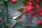 Berry Merry Christmas by WalnutHill
