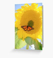 Monarch On the Sun Greeting Card