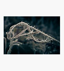 Hoar Frost (Natural Magic) Photographic Print