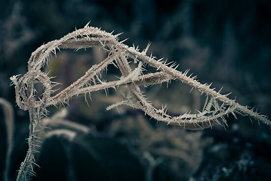 Hoar Frost (Natural Magic) by Jay Taylor