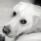 Puppy Dog Eyes by Josie Eldred