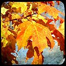 Old School Fall Leaves by Chris  Brewer