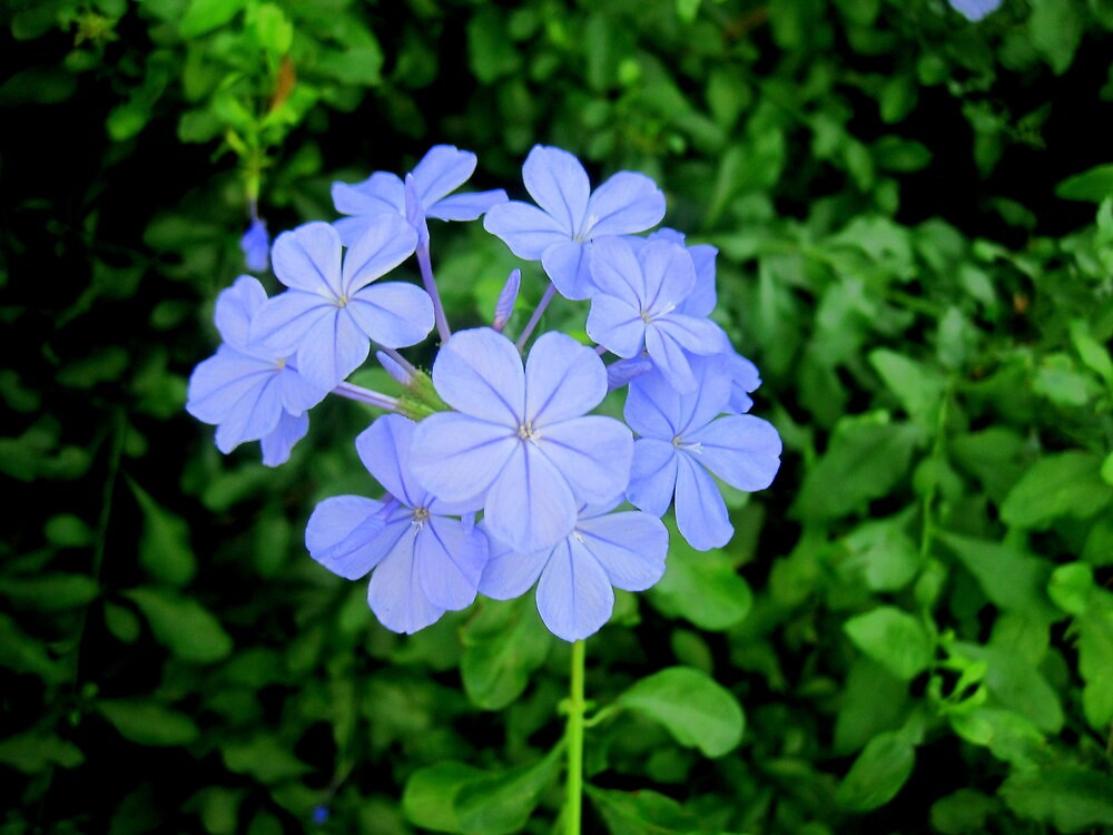 Purple Flower Bouquet  by LaurelMuldowney