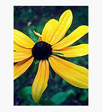 Gore Mountain Flower Photographic Print