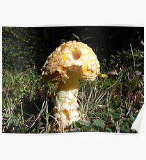 Golden Mushroom Poster