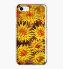 Nocturnal suns iPhone Case/Skin