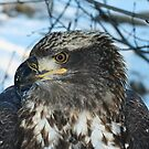 Young Eagle 5 by Mike Shero