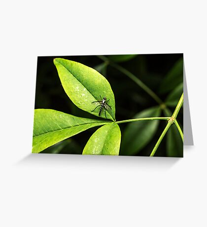 Wasp or Fly (unknown) Greeting Card