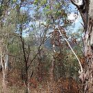 Bush Fire Season BE AWARE by aussiebushstick