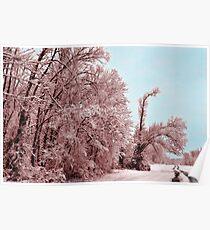 Southern Illinois Winter Scene 8_ Dec 2012 Poster
