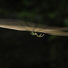 spider on the web by dc witmer