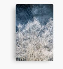 Frosted Trees Metal Print