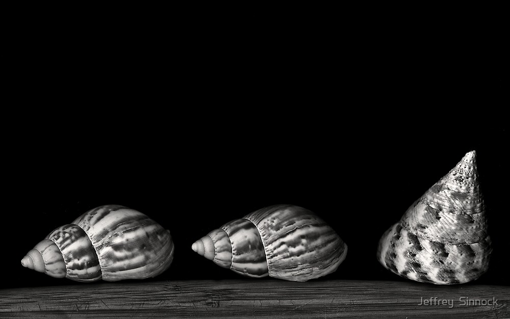 Three Shells by Jeffrey  Sinnock