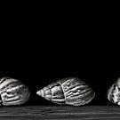 Three Shells by Jeffrey  Sinnock