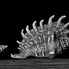 Three Shells 2 by Jeffrey  Sinnock