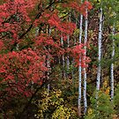Autumn Foliage by David Kocherhans