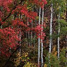 Autumn Foliage (Vertical) by David Kocherhans