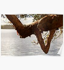 Lake Ainsworth - Lennox Head NSW Poster